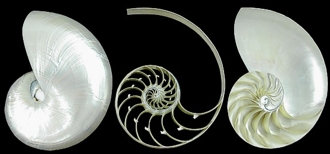 Pearl Nautilus 3 Sections Set