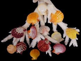 Mixed Colorful Pectins (hun)