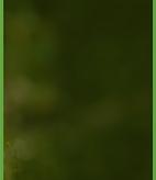 fondo-verde.png
