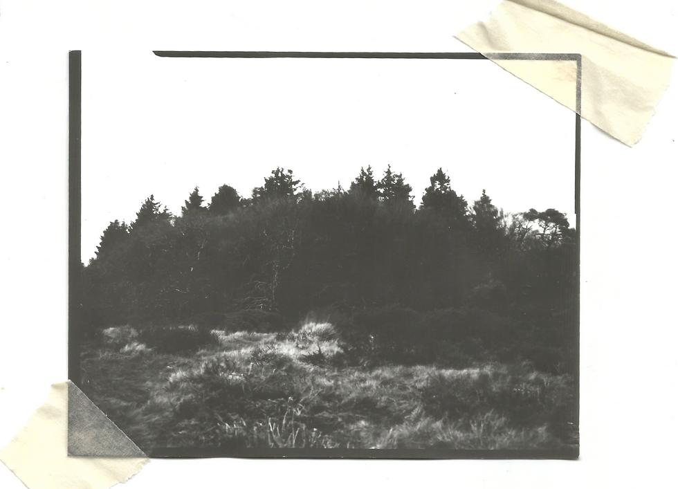 Treeline [Dartmoor]