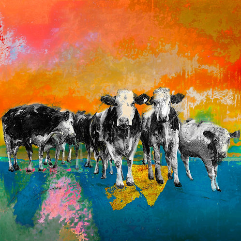 Cows at Stonor Farm 11x14 inch print