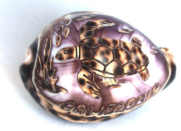Calif. Sea Turtle