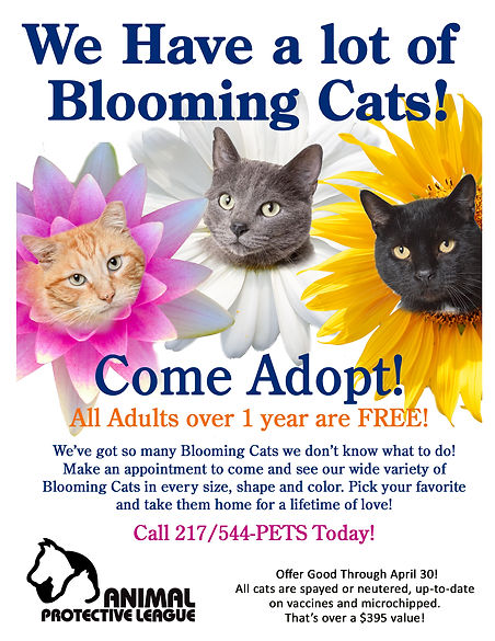 April Blooming Cats Final.jpg