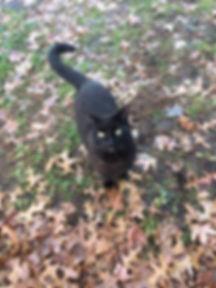 Barn cat 2.jpg
