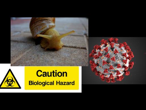 Φόβους για νέα πανδημία από σαλιγκάρια εκφράζει ο ΠΟΥ