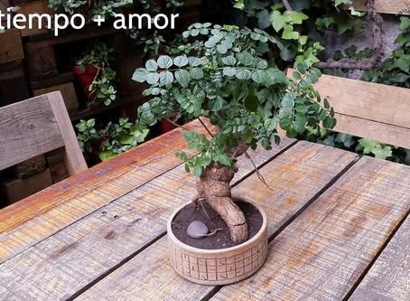 Las Plantas: una terapía para el alma