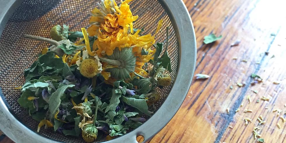 Growing a Medicinal Tea Garden