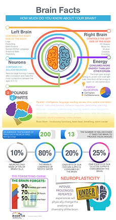Brain infographic.png
