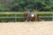 Horse starting brisbane