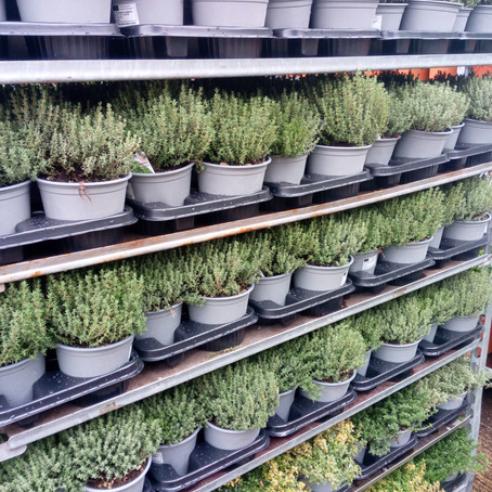 What do you need to consider before buying plants?