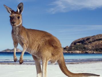 Visado Australia y Nueva Zelanda