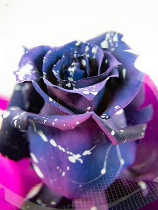 Galaxy Rose Flower Globe Close-up