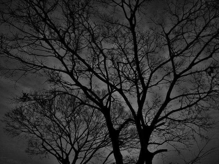 暗い森.jpg