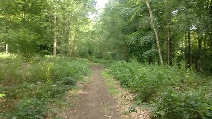 woods photo.jpg