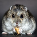hamster-1772742_1920.jpg