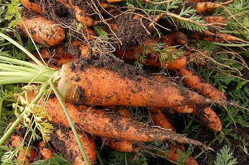 carrot-551661_1920.jpg