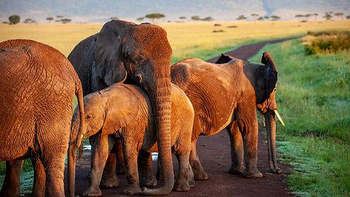 elephant-4120822_1920.jpg