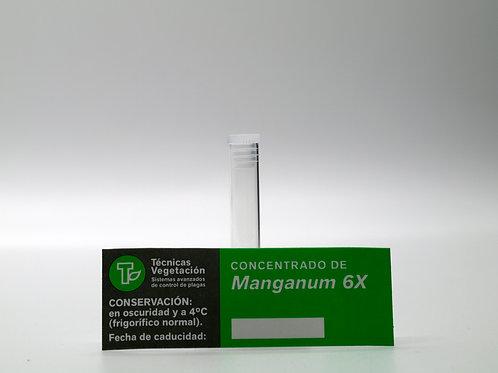 Manganum 6 X