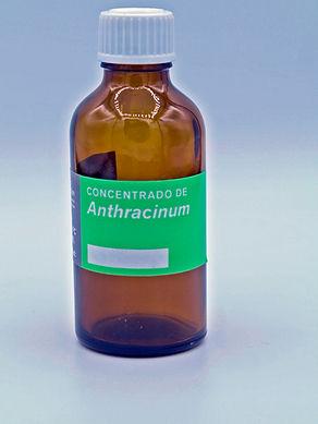 anthracinum.JPG