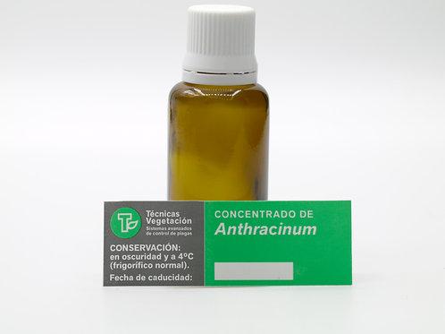 Anthracinum 50cc