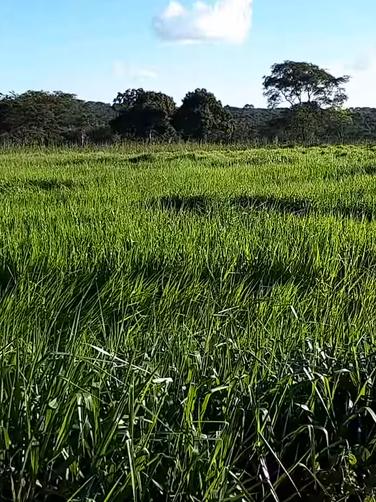 Você sabe quais os ganhos ao planejar a produção de pastagens?