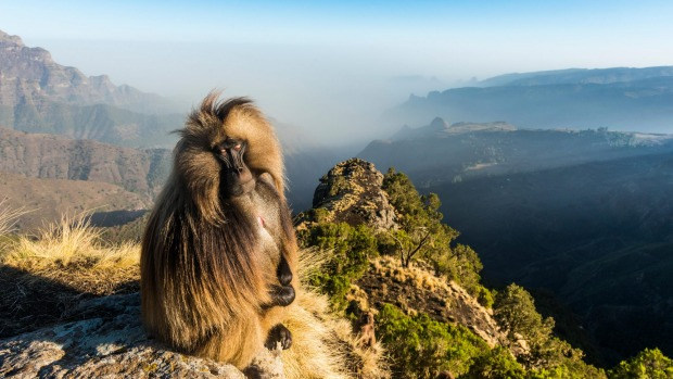 Ethiopia, in the Horn of Africa, is a rugged, landlocked country split by the Great Rift Valley. With archaeological finds dating back more than 3 million years, it's a place of ancient culture.