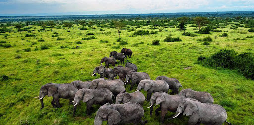 Uganda is a landlocked country in East Africa whose diverse landscape encompasses the snow-capped Rwenzori Mountains and immense Lake Victoria.