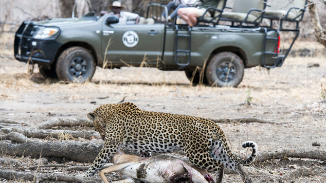 Absolute Zambia Safaris is a Travel & Safari company specialized in Tailor made safaris and Tours as well as privately guided tours for Zambia and beyond.