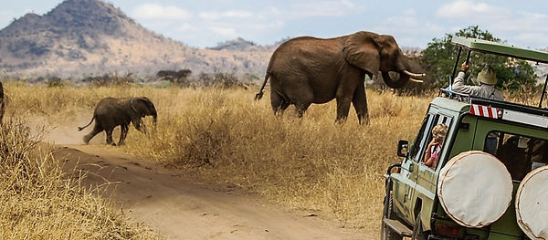 Enchanting-Travels-Africa-Safari.jpg