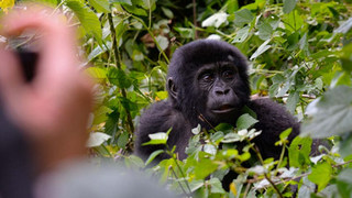 gorilla-trips-saso-1024x683.jpg