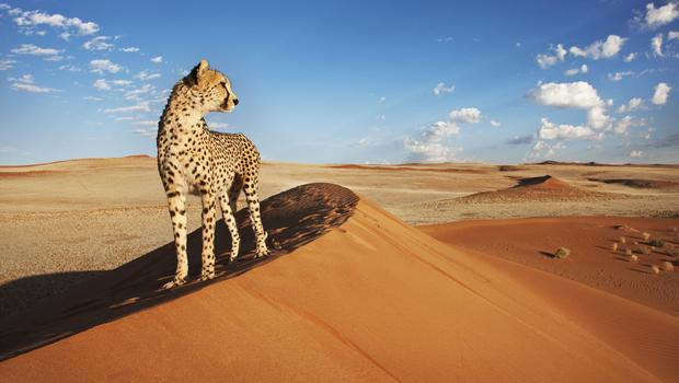Namibia, a country in southwest Africa, is distinguished by the Namib Desert along its Atlantic Ocean coast.