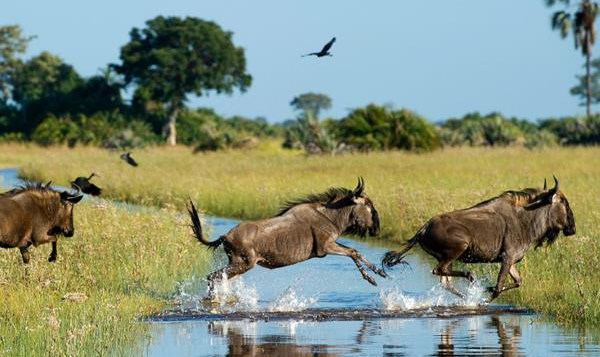 Botswana, a landlocked country in Southern Africa, has a landscape defined by the Kalahari Desert and the Okavango Delta, which becomes a lush animal habitat during the seasonal floods.
