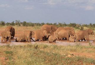 ELEPHANTS TSAVO EAST PIC-1.JPG