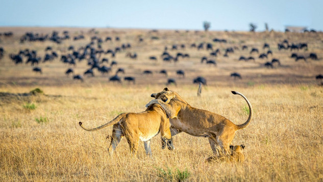 Tanzania is an East African country known for its vast wilderness areas.