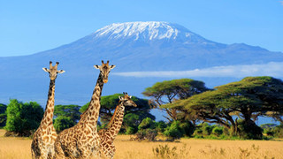 Kenya is a country in East Africa with coastline on the Indian Ocean. It encompasses savannah, lakelands, the dramatic Great Rift Valley and mountain highlands.