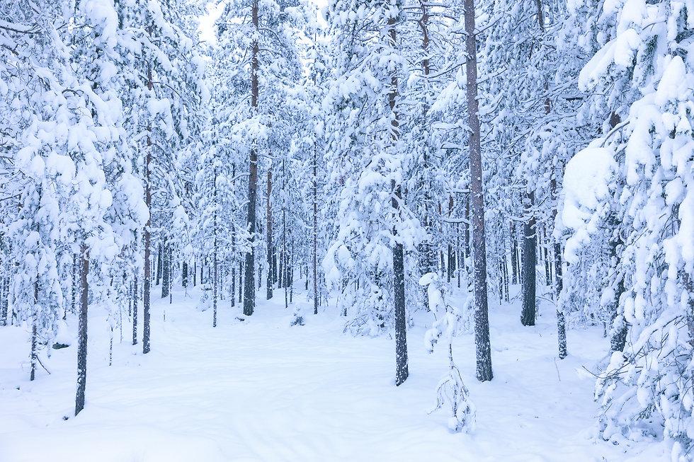 Rovaniemi-2.jpg