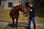 AQHA Burnin Cds at Nathan Piper Reining Horses