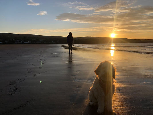 beautiful-beach-with-dog.jpg