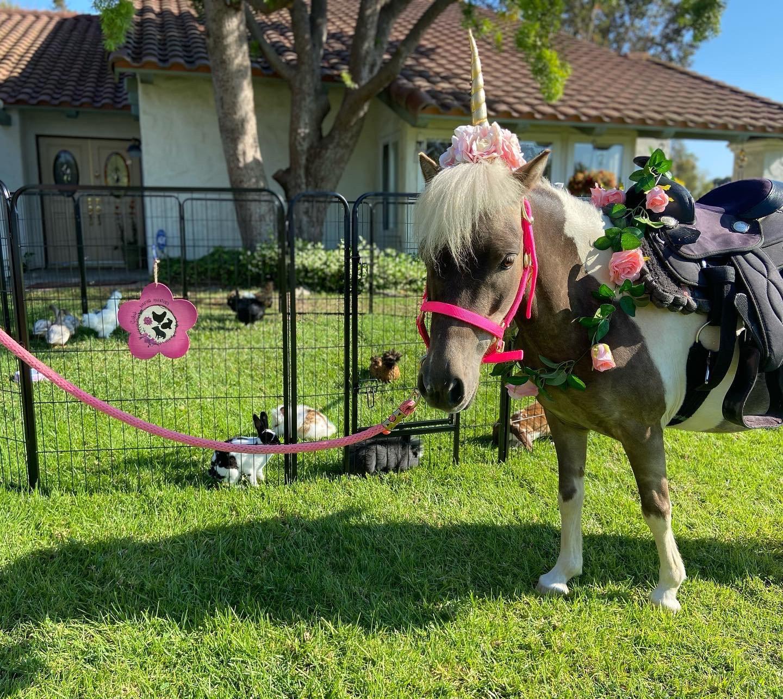 Unicorn & Full Petting Zoo 1 hour