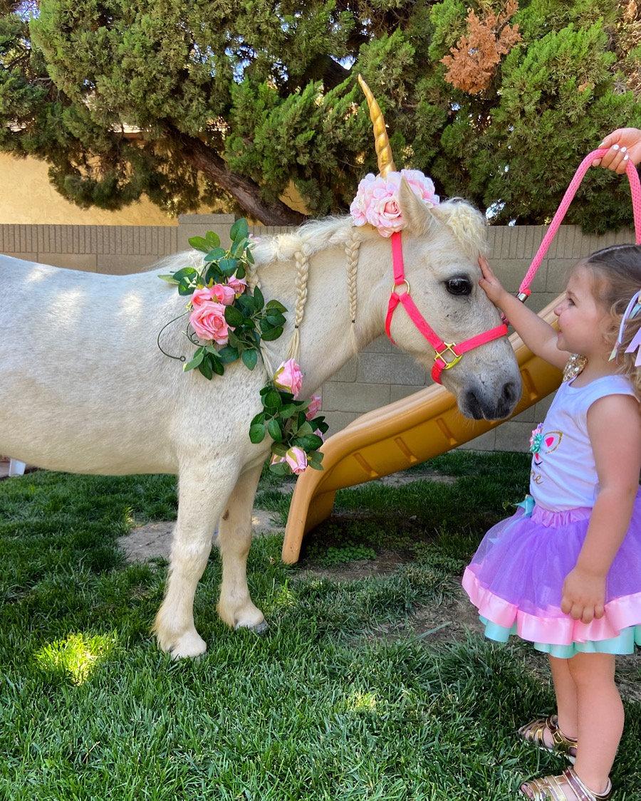 2 Unicorns 1 hour Mon-Fri