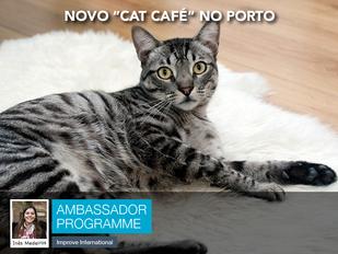 """Novo """"Cat Café"""" no Porto"""