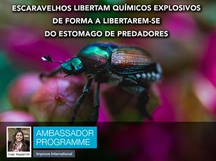 Escaravelhos libertam químicos explosivos de forma a libertarem-se do estomago de predadores