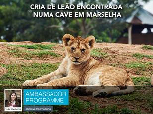 Cria de leão encontrada numa cave em Marselha