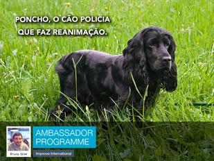 Poncho, o cão polícia que faz reanimação