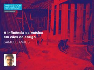A influência da música em cães de abrigo