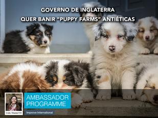 """Governo de Inglaterra quer banir """"Puppy Farms"""" antiéticas"""