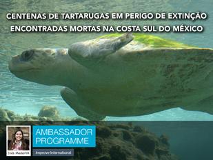Centenas de tartarugas em perigo de extinção encontradas mortas na costa sul do México