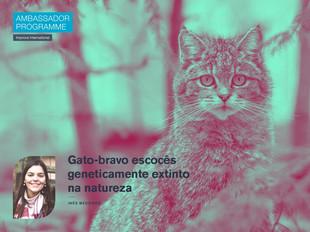 Gato-bravo escocês geneticamente extinto na natureza