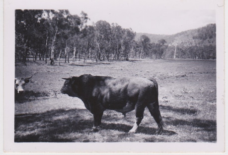 'Podge' 1950's