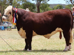 2017 Supreme Exhibit Stanthorpe